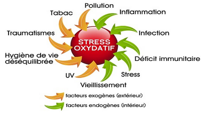 """Résultat de recherche d'images pour """"Le stress oxydatif"""""""